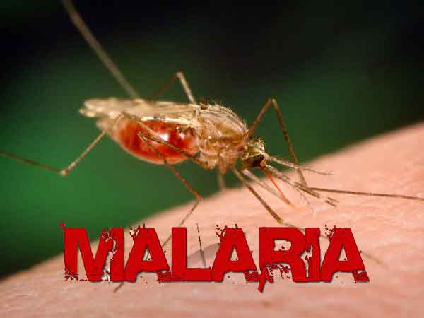 Photo of Malaria আসলে কি?