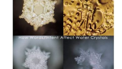 Photo of Water memory: myth or science
